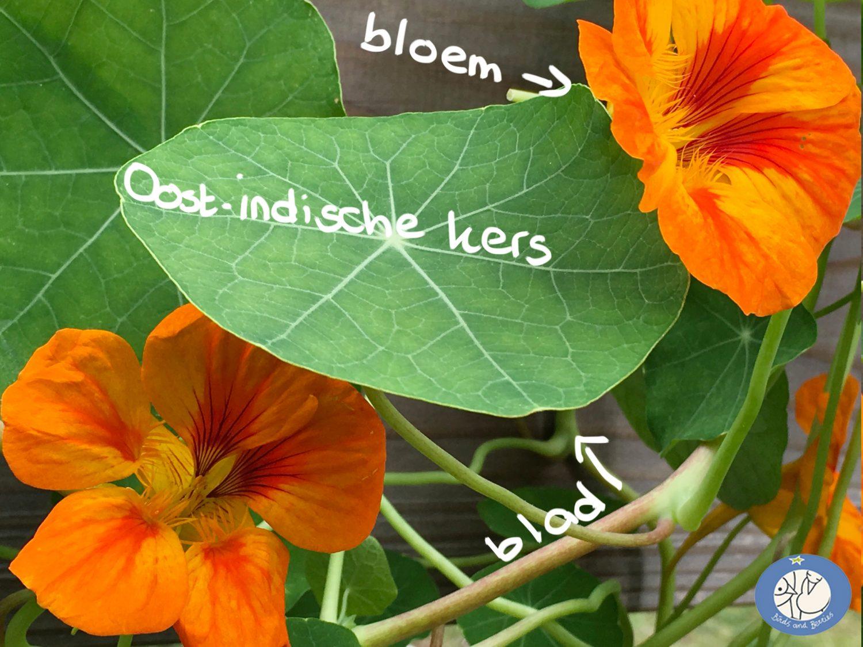 Oost-indische kers en logo webshop birds and berries